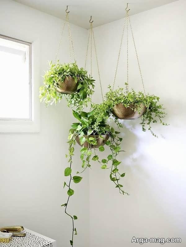 تزیین هنرمندانه خانه با گل پتوس
