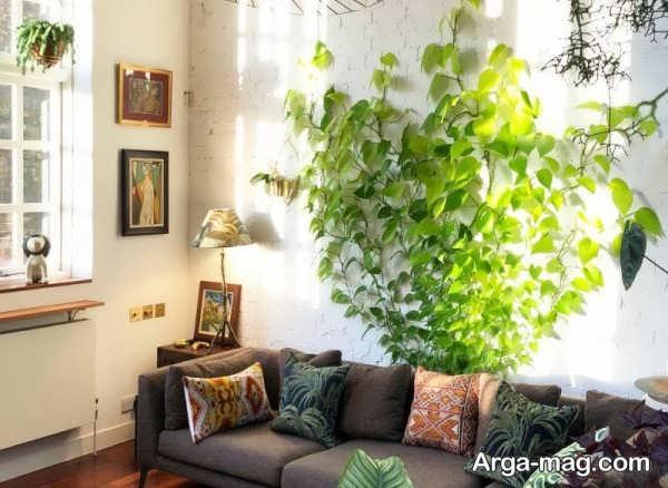انواع تزیین خانه با گل پتوس
