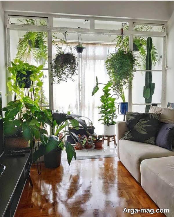 تزیین شیک خانه با گل پتوس