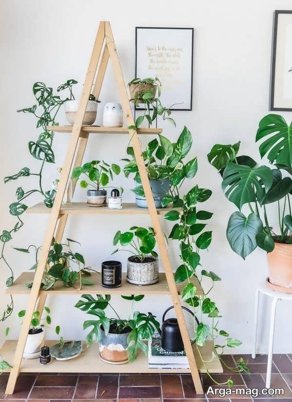 تزیین خاص خانه با گل پتوس