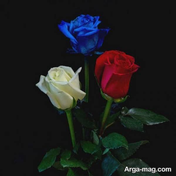 عکس گلهای رز سرخ