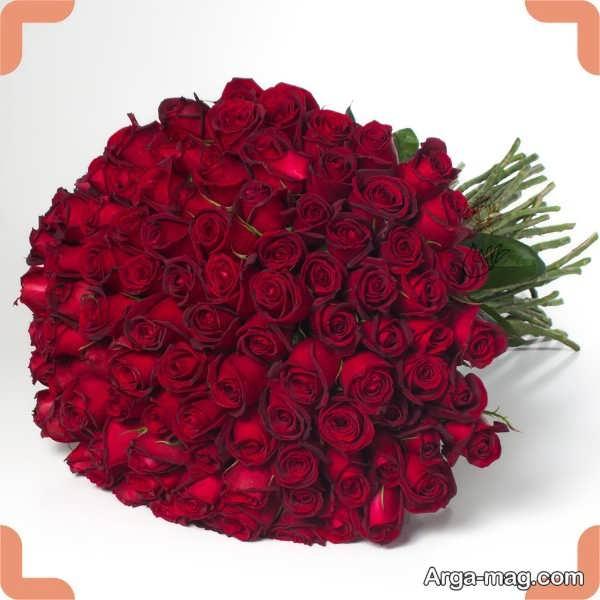 عکس زیبای و شیک گلهای رز قرمز