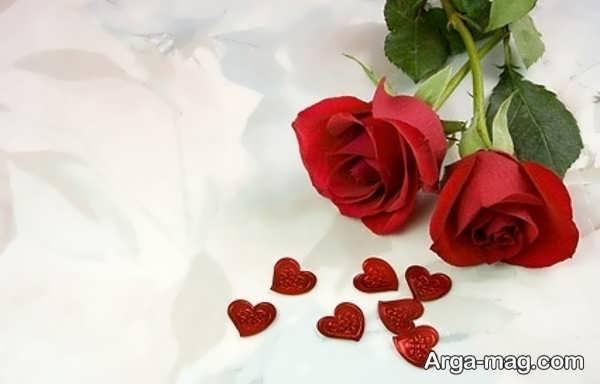 عکس زیبای گل رز قرمز