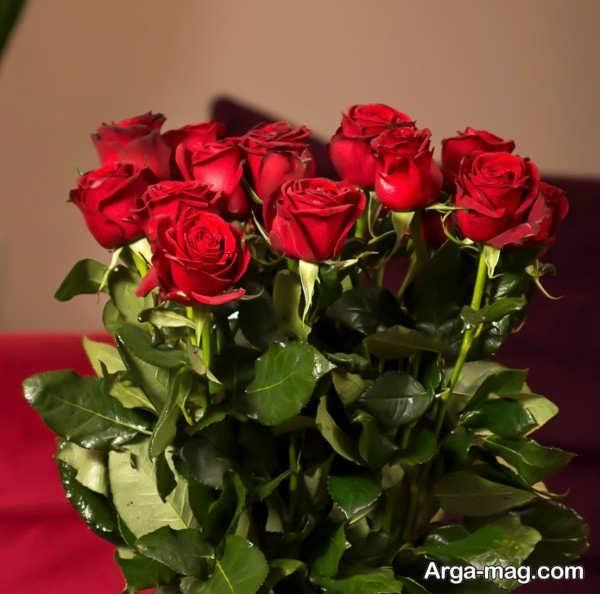 عکس گلهای رز قرمز جذاب