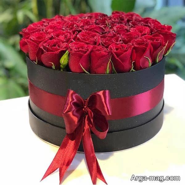 عکس گلهای رز قرمز