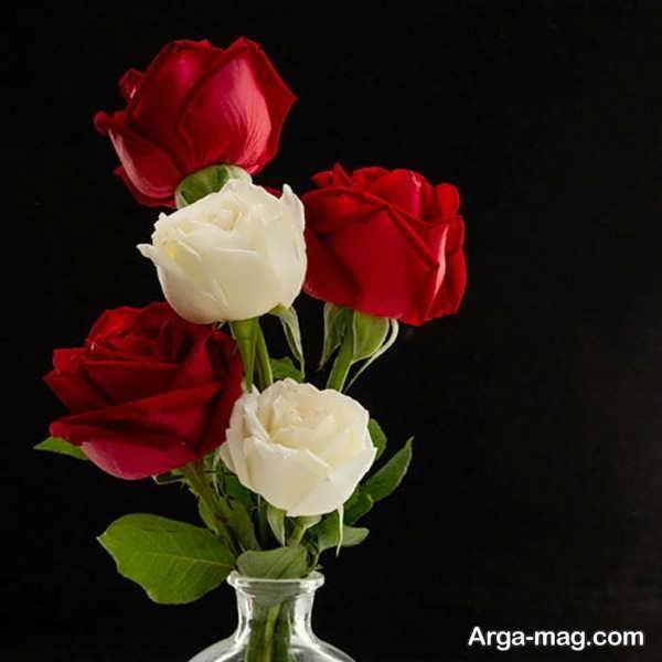 انواع گلهای رز قرمز