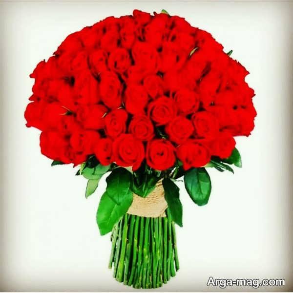 عکس گل رز سرخ