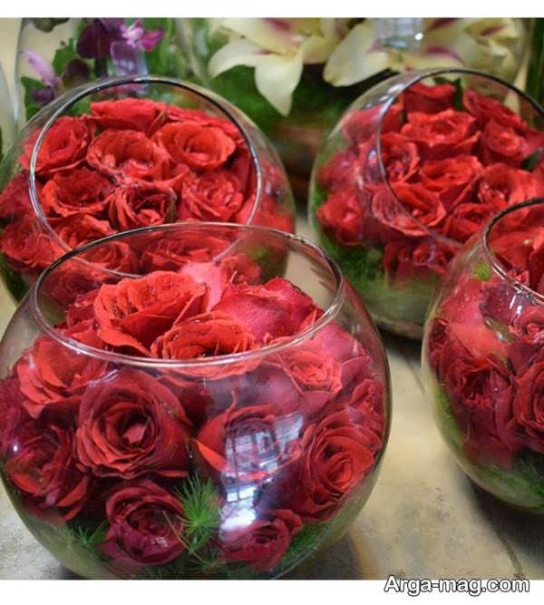 عکس گل رز قرمز جذاب