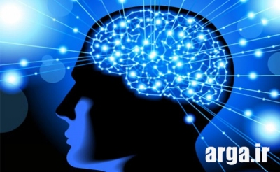 تخم بلدرچین و سلامتی مغز