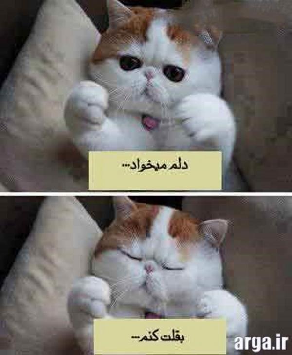 گربه ملوس در عکس خنده دار