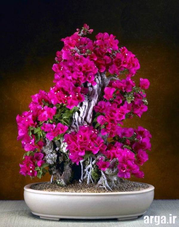 دومین عکس گل بونسای