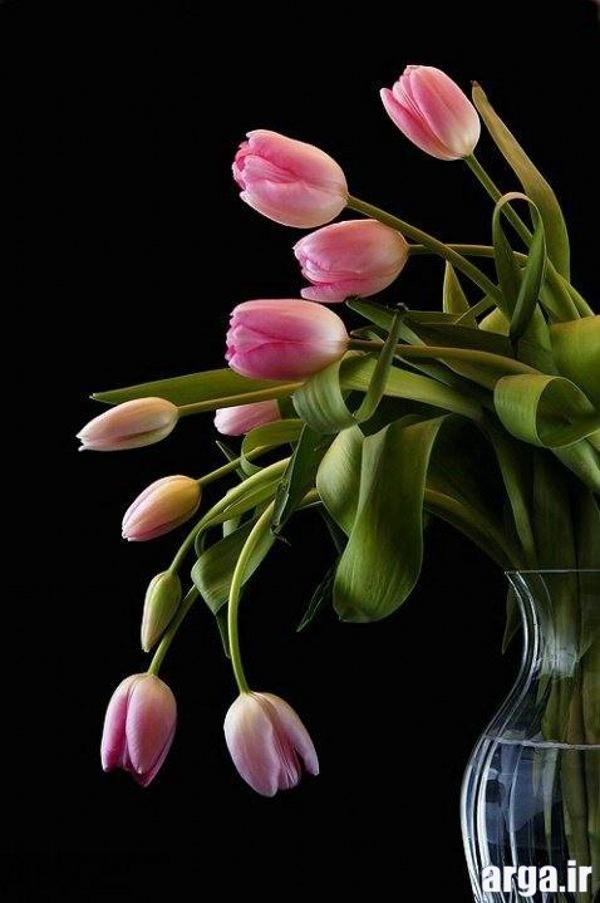 گلدان گل لاله