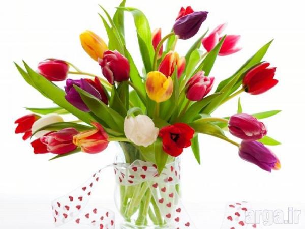 عکس گل لاله در رنگ های مختلف
