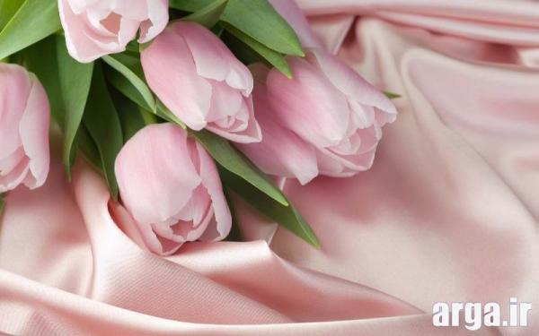 گل لاله دوست داشتنی