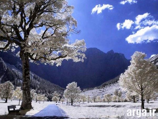 درختان زیبا در منظره برفی