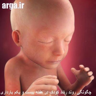 جنین 21 هفته