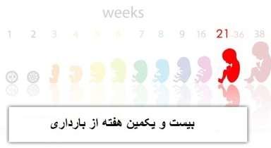 هفته بیست و یکم بارداری