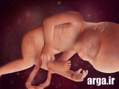 هفته 24 بارداری