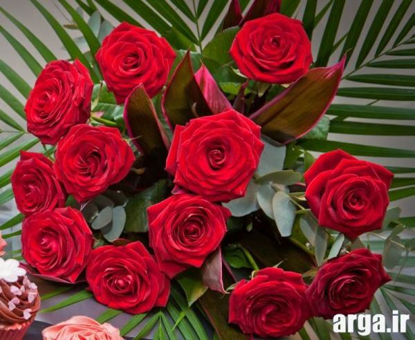 گل رز شیک
