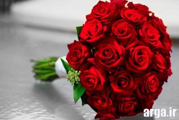 گل رز قرمز شاداب