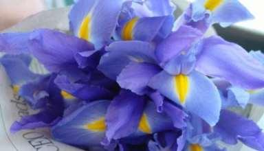 عکس گل زنبق