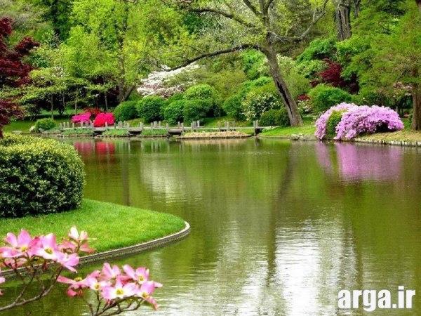 تصاویر زیبای طبیعت گلها
