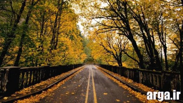 زیباترین تصاویر طبیعت جاده پاییزی