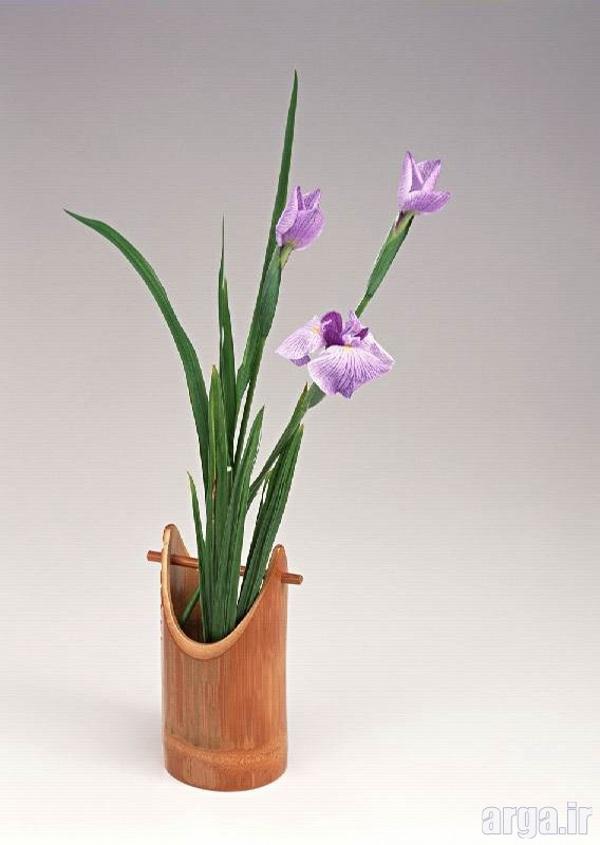 گل زنبق طبیعی