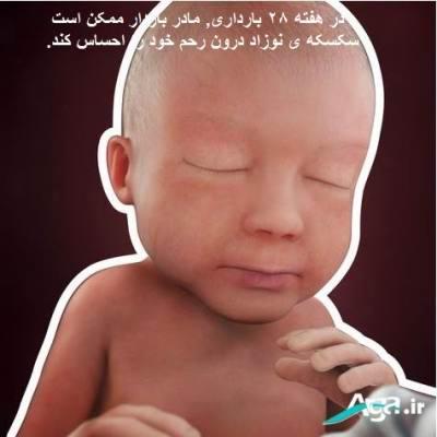سکسکه جنین 28 هفته در رحم