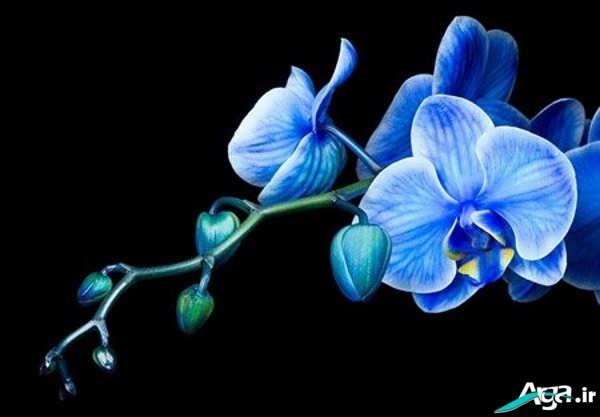 عکس گل های ارکیده