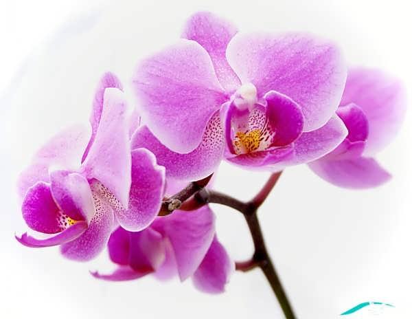 عکس های گل زیبا