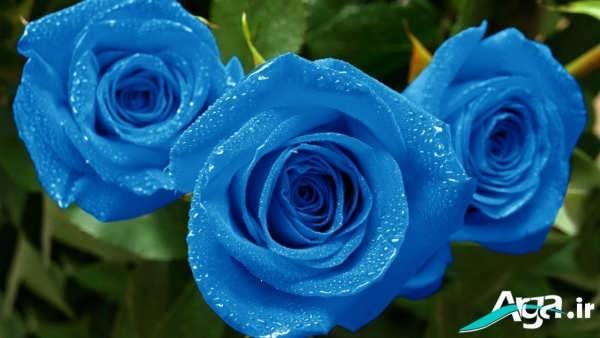 عکس گل آّبی