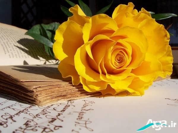 گل زرد