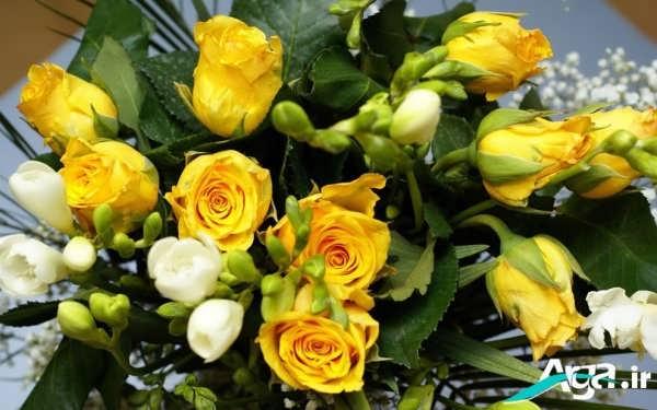 دسته گل رز زرد