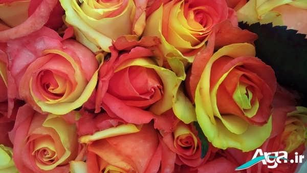 تک گل فانتزی