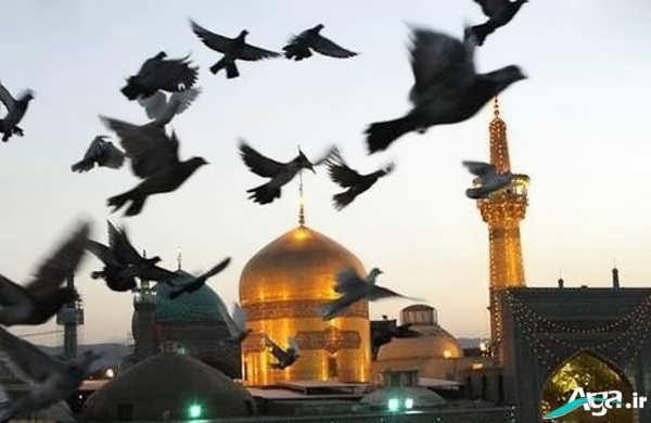 عکس کبوتر حرم امام رضا