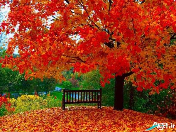 منظره پاییزی