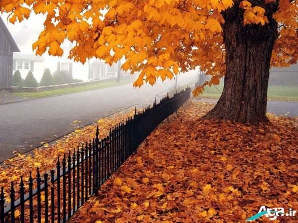 عکس پاییز زیبا