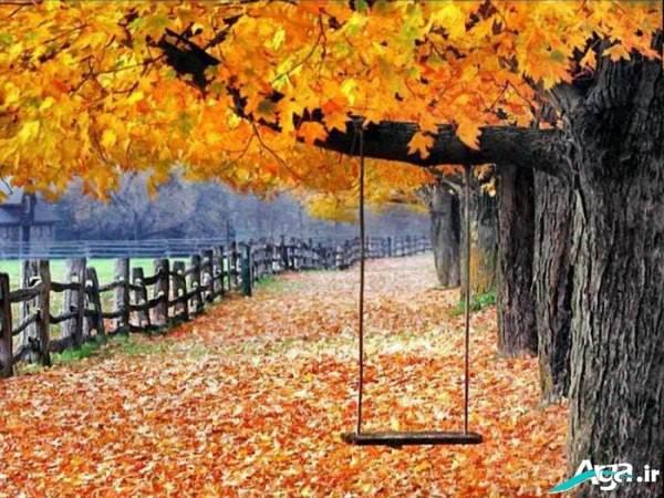 درخت در فصل پاییز