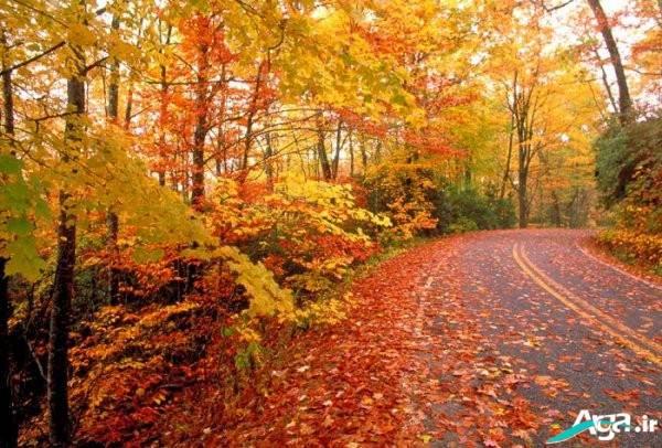 جنگل در فصل پاییز