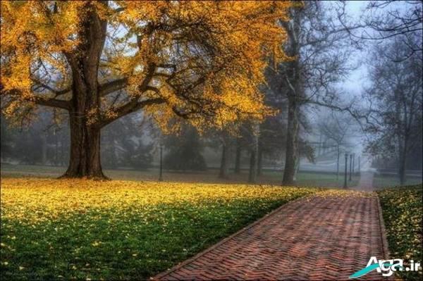 عکس زیبای پاییز