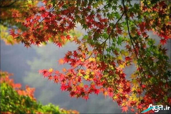 عکس درختان پاییزی