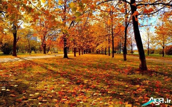 عکس جنگل پاییزی
