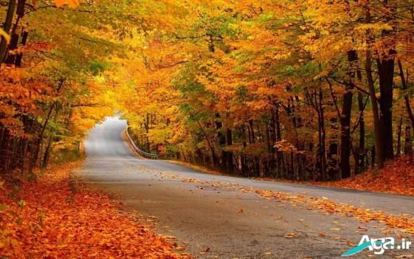 عکس جاده در پاییز