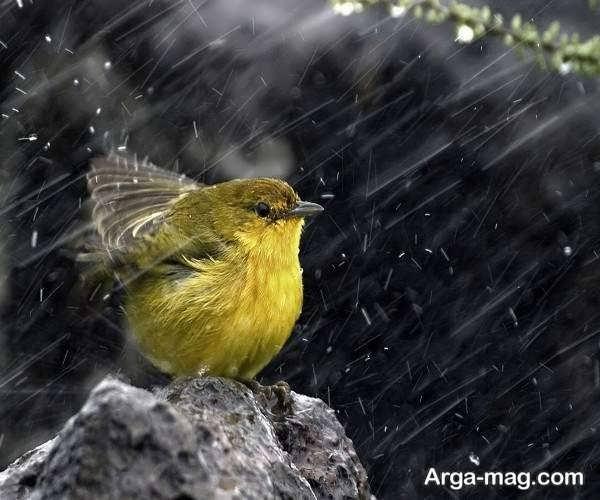 عکس طبیعت بارانی خاص