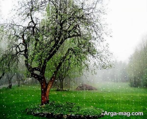 عکس طبیعت بارانی جذاب