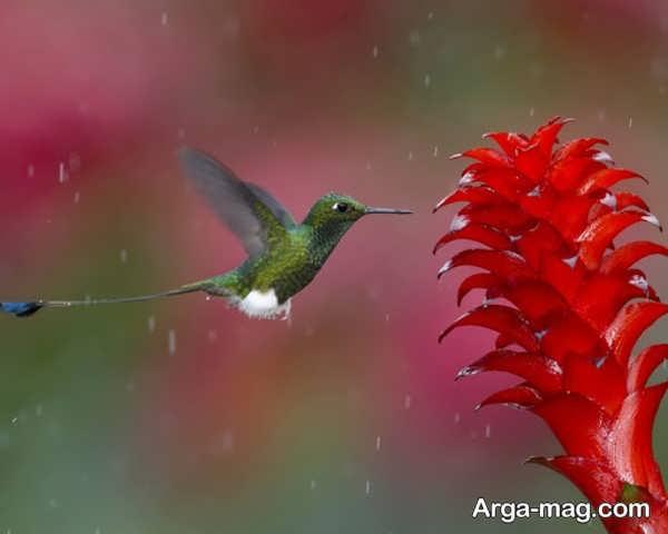 عکس طبیعت بارانی