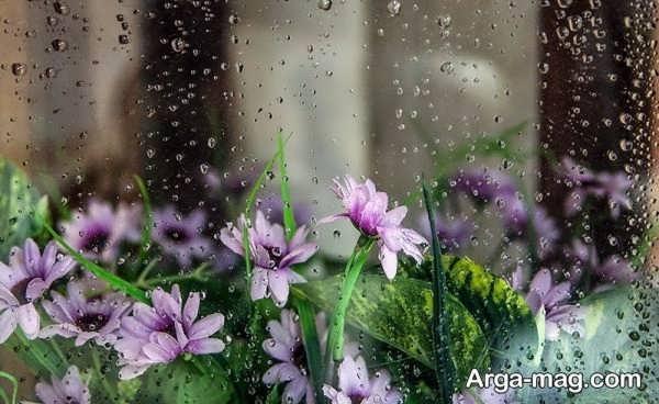عکس منظره بارانی بکر