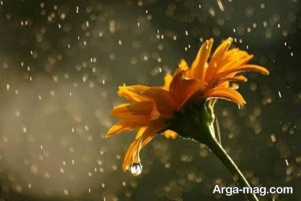 جدیدترین عکس طبیعت بارانی