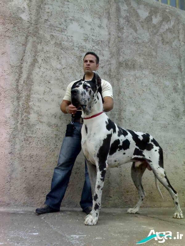 سگ دوبرمن سفید